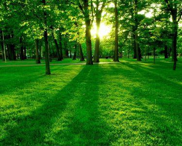 Green-forest-wallpaper-green-20036604-1280-1024