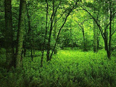 Green-healing